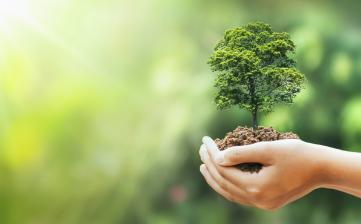 Transporte Excelsior promove enriquecimento em área de reflorestamento