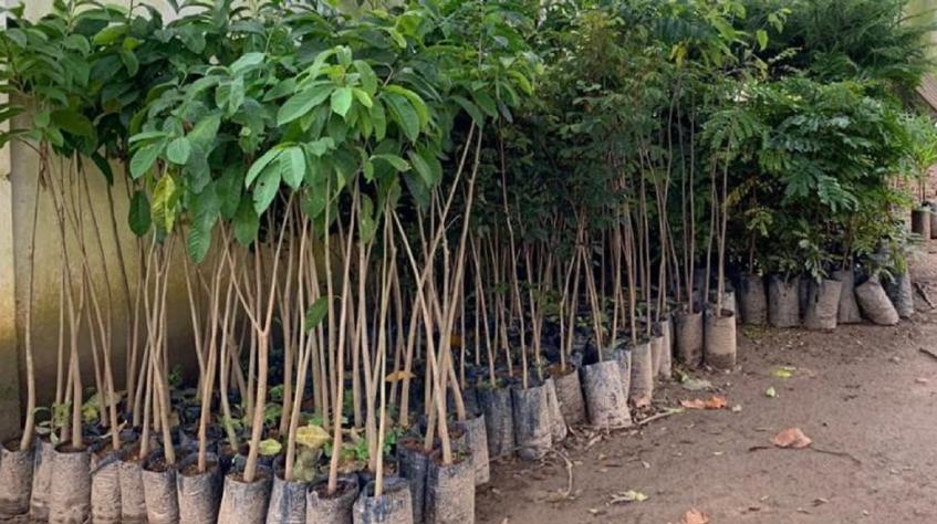 Transporte Excelsior celebra o Dia do Meio Ambiente com plantio de mudas
